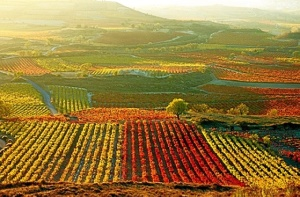 Llanuras de La Rioja