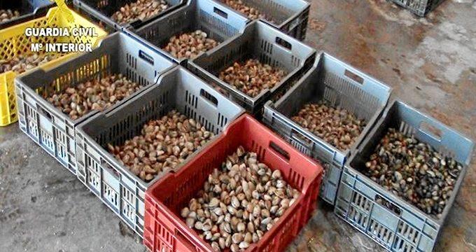Incautados 530 kilos de almejas en Huelva dentro de una operación europea contra el fraude alimentario