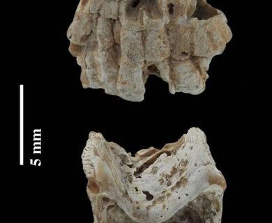 Descubierta una nueva especie de crustáceo en un proyecto de la Universidad de Cantabria