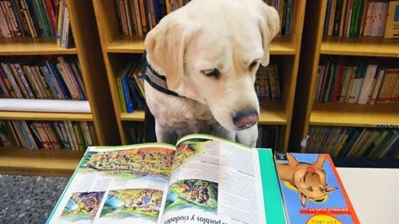 La Fundación Acavall inicia en Valencia un programa de animación lectora asistida con perros para niños
