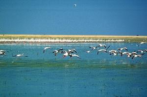 Doñana es un espacio natural único en Europa.