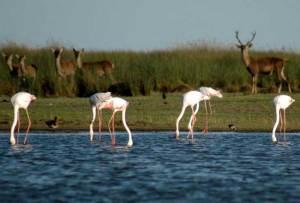 Doñana es conocida por su riqueza natural, tanto por su flora como por su fauna. / Foto: sienteandalucia.com.
