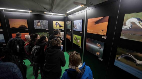 Lleno absoluto en FIO, la gran cita del turismo ornitológico del sur de Europa