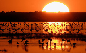 Parque Nacional de Doñana. / http://www.manueljesusflorencio.com