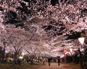 Celebración del 'hanami' en Japón. / http://matome.naver.jp