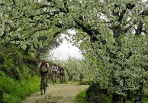 Ruta BTT del Cerezo en Flor. / http://primaveraycerezoenflor.blogspot.com.es