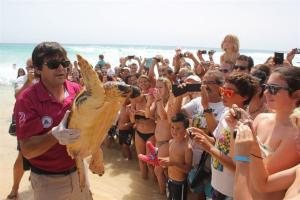 tortugas Caretta caretta