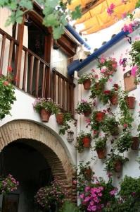 Geranios y gitanillas visten los patios cordobeses. Foto.: P.Monterroso en San Basilio, 17