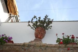 Espinas de Cristo. Foto: P.Monterroso, San Basilio, 20