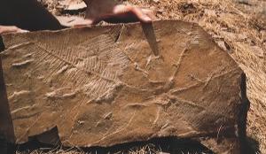 Fósiles del yacimiento de Las Hoyas. / http://www.yacimientolashoyas.es