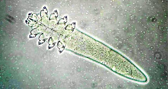 Un laboratorio de Huelva identifica molecularmente un ácaro que podría intervenir en el cáncer de piel