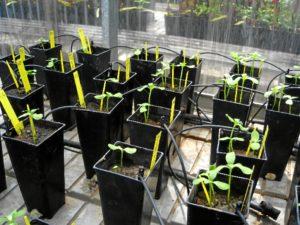 Uso-del-biocarbón