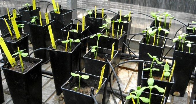 """El biocarbón, el """"abono verde"""" que combate el cambio climático"""