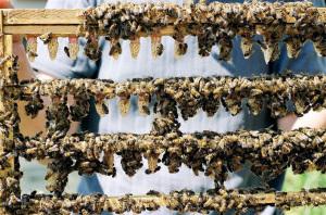 España lidera la apicultura de la UE. / Foto: Europa Press.