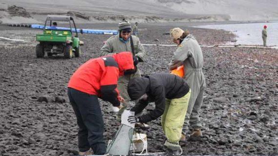 Investigadores españoles descubren una nueva especie de gusano marino en la Antártida