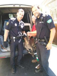 Los agentes con el animal una vez capturado.
