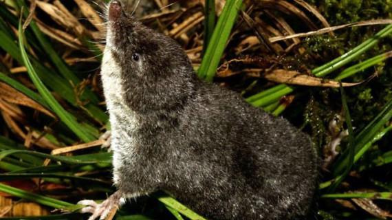 Descubren una nueva especie de mamífero en las sierras malagueñas de Tejeda y Almijara