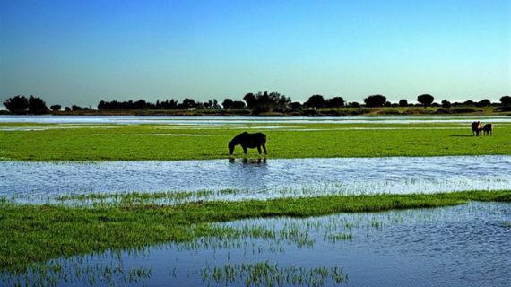 Doñana celebra sus 46 años con la inclusión en la Lista Verde de las áreas protegidas mejor conservadas del mundo