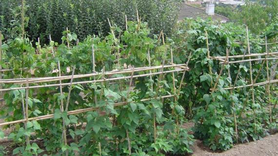 Agricultura aprueba ayudas para fomentar la integración de entidades agroalimentarias