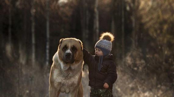 El 98% de los niños asegura tener claro que los animales no son juguetes
