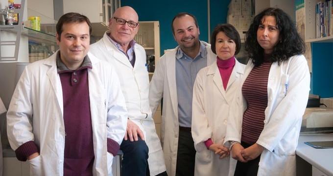 Científicos españoles demuestran el gran potencial anticancerígeno de un compuesto derivado de la aceituna