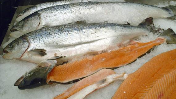 Un gallego captura en el río Eo el primer salmón de la temporada en Asturias