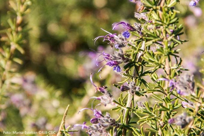 El Real Jardín Botánico ofrece un curso sobre la nomenclatura de las plantas