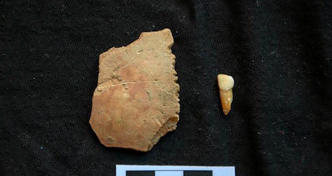 Hallan el diente y el parietal de un niño neandertal que vivió en la Cova de les Teixoneres de Moià hace 50.000 años