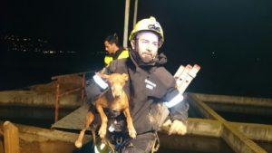 Lograron sacar al perro sano y salvo. / Foto: Europa Press.