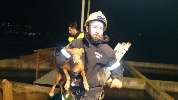 Rescatan a un perro que había quedado atrapado en una tubería en un pueblo de Valencia