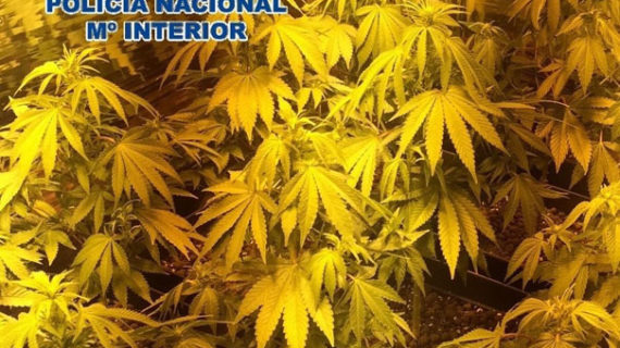 Dos detenidos por cultivar marihuana en un piso de Málaga cuyo crecimiento estimulaban con música