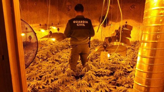 Guardia Civil de Jayena interviene 759 plantas de marihuana descubiertas por un enganche de luz