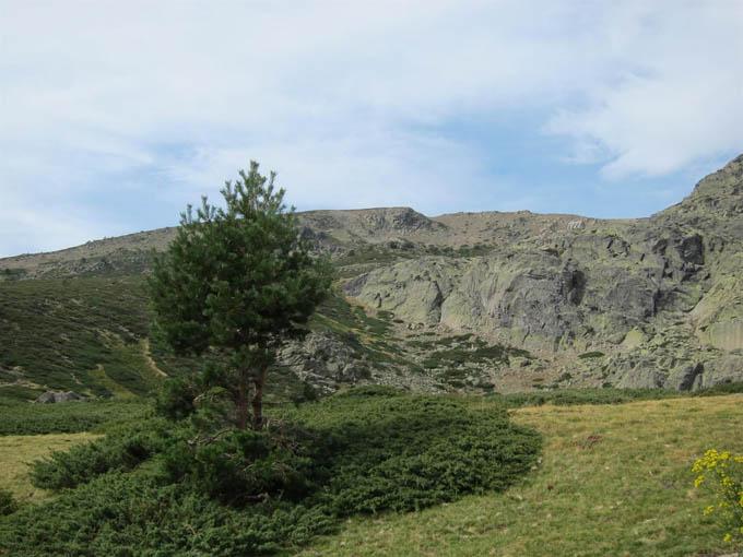 Medio Ambiente publica un libro sobre la flora silvestre del Parque Nacional de la Sierra de Guadarrama