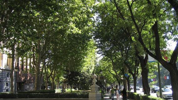 El Paseo del Prado acoge una nueva edición de 'Sustainable Sunday', la fiesta de la Sostenibilidad