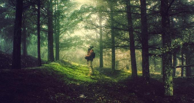 La fotografía 'Génesis', de Ricardo Ramos, gana el concurso 'Disfruta del Bosque' en España