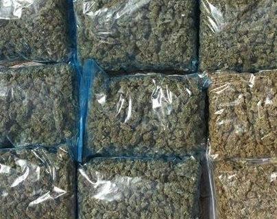 Intervenidas en Cádiz más de 8.000 plantas de marihuana