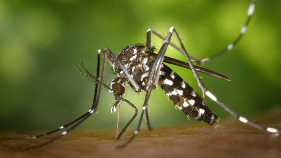 La lucha contra el mosquito tigre llega a las escuelas de varias provincias españolas