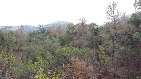 Los bosques españoles se adaptan a las sequías extremas de formas distintas, según un estudio del CSIC