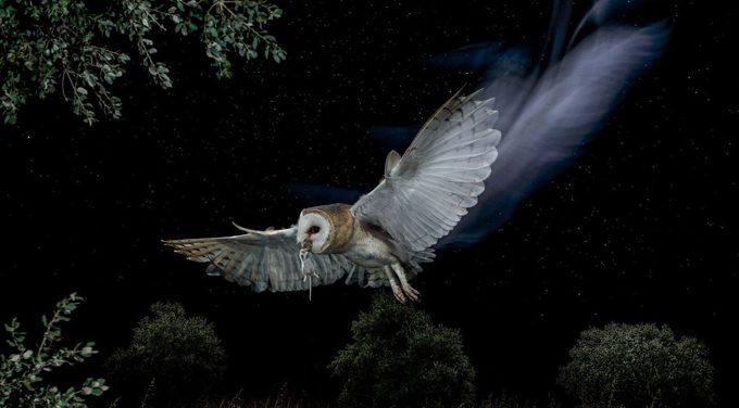 Más de 1.000 voluntarios de SEO/BirdLife contarán aves diurnas y nocturnas en toda España durante la primavera