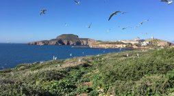 Elevan la protección ambiental de las islas Chafarinas al declararlas Zona de Especial Conservación