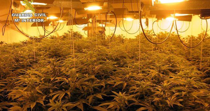 Guardia Civil detiene a un individuo con 82 plantas de marihuana, armas y munición en Alhama (Murcia)