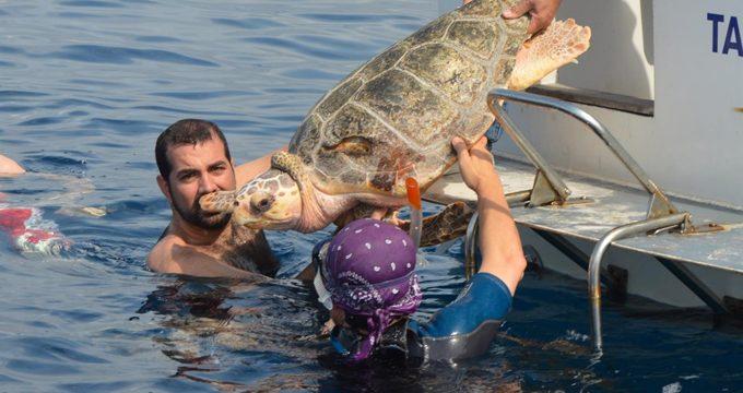 Un nuevo estudio propone medidas para garantizar el futuro de las tortugas bobas en el Mediterráneo