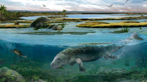 Descubren una 'vaca marina' que vivió en los Pirineos oscenses hace 42 millones de años