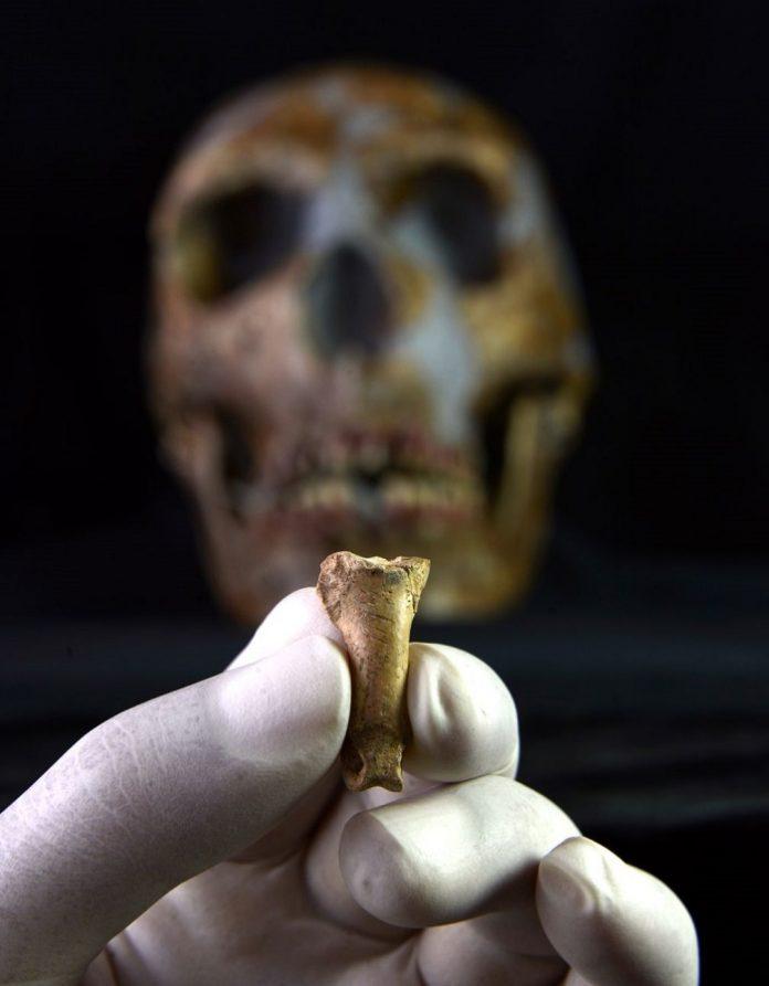 Un collar neandertal hallado en una cueva de Tarragona, en el TOP de los descubrimientos en evolución humana del 2019