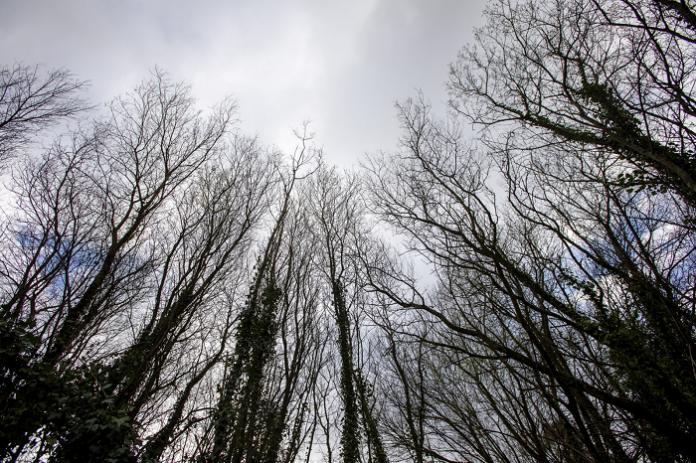 Galicia elaborará un Inventario Forestal Continuo de sus masas de árboles