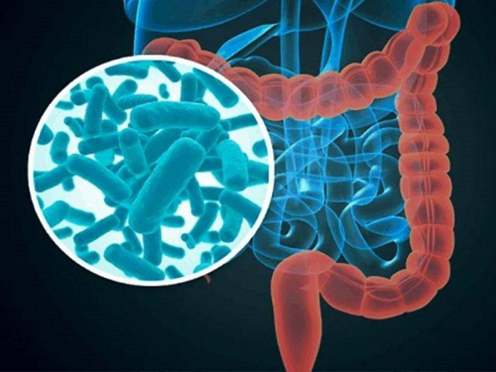 La dieta durante el embarazo afecta a la microbiota y el desarrollo de los bebés