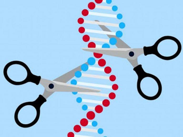 Utilizan 'tijeras' moleculares para destruir el genoma del COVID