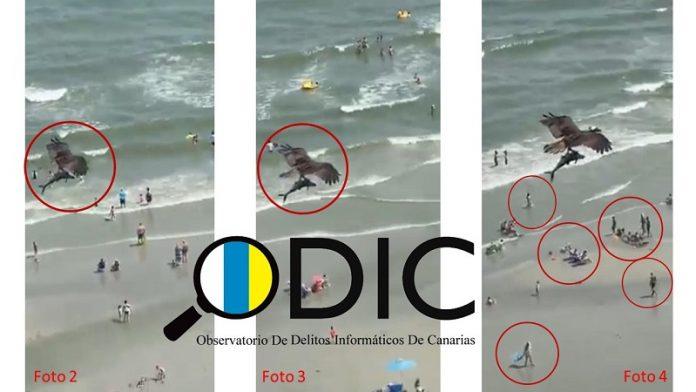 El vídeo viral del águila que atrapó a un tiburón, ¿real o fake?