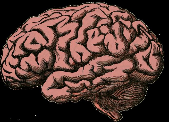 El cerebro se sirve de distintos ritmos de ondas para adaptarse a las demandas cognitivas