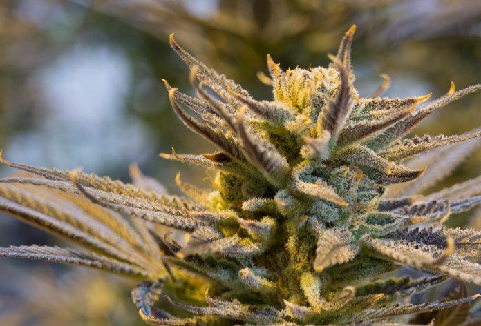 Desarticulado un grupo de transporte internacional de marihuana